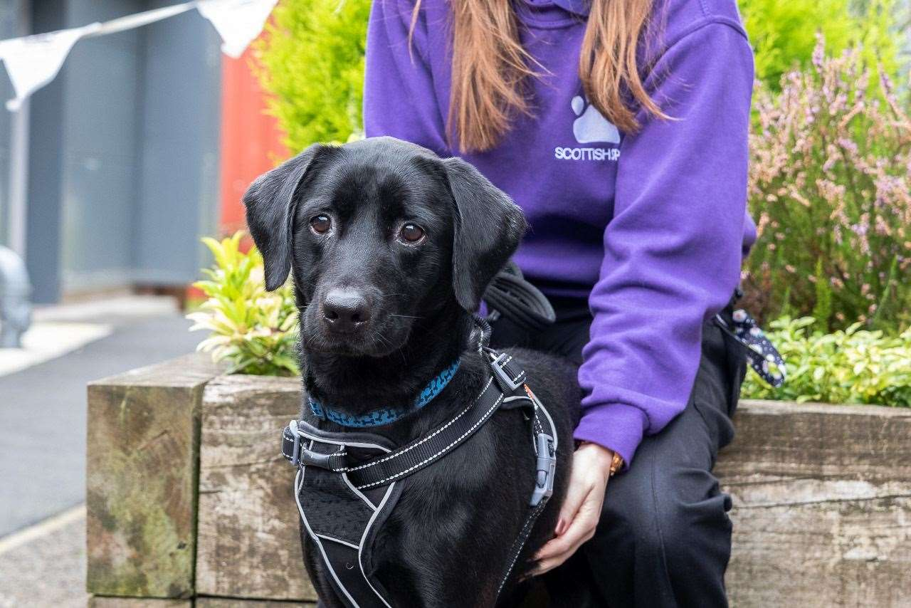 A dog waiting to be rehomed by the Scottish SPCA.
